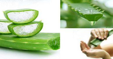 एलोवेरा के औषधीय गुण, फायदे लाभ एवं चेहरे पर लगाने के उपयोग