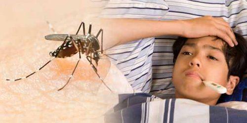 डेंगू का बुखार