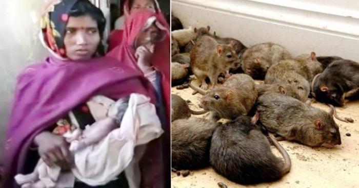 9 दिन के बच्चे को चूहों ने कुतर डाला, उसके बाद जो हुआ वो दिल दहला देगा