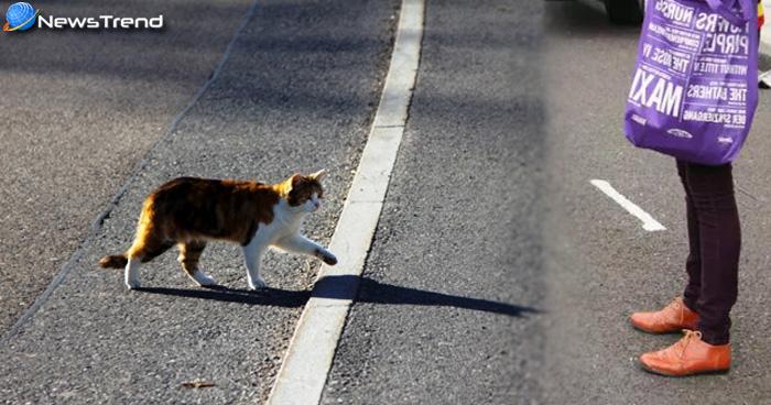 बिल्ली का रास्ता काटना