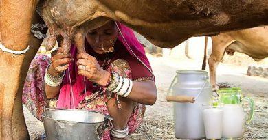 गाय का दूध बढ़ाने के उपाय