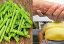 सहजन की सब्जी खाएंगे तो 300 रोगों को दूर भगाएंगे, जाने सहजन खाने के फायदे