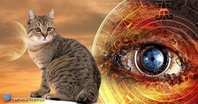 बिल्ली बताती है आपका भविष्य, समझ गए इन इशारों को तो समझो जीवन की सभी परेशानी खत्म
