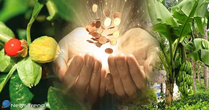 अगर चाहते हैं पैसों की बरकत तो घर में आज ही लगाएं ये पौधे, जिंदगी भर नहीं कोई होगी धन की कमी