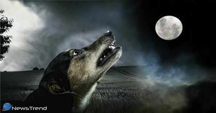 क्या आप रात में कुत्ते के रोने की वजह आत्माओं का होना मानते हैं, जान लीजिये ये बातें