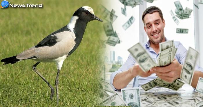 अगर आपने पाल लिया ये पक्षी तो बन जाएंगे रातों-रात अमीर