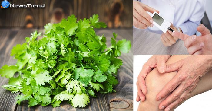 सर्दी की बीमारियों से बचने के लिए हर दिन खाएं हरी धनिया, जानिए इसके गुणकारी और जबरदस्त फायदे