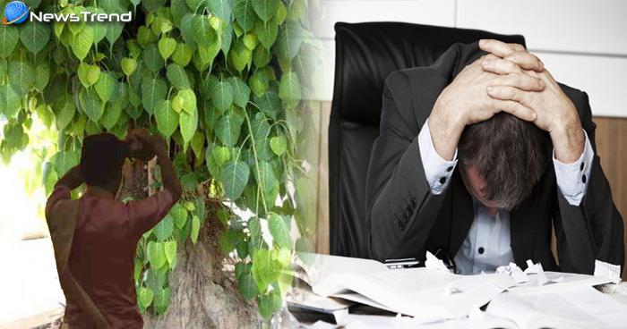 यदि हफ्ते के इस दिन चढ़ाया पीपल के पेड़ पर जल तो होगा भारी नुकसान