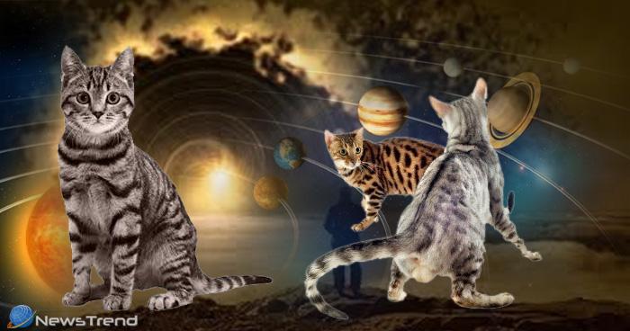 भविष्य में होने वाली घटनाओं को पहले से ही भांप लेती है बिल्ली, देती है आपको ये 5 बड़े संकेत
