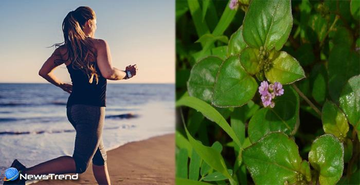 ताउम्र रहना चाहते हैं स्वस्थ तो आज ही घर ले आइये पुनर्नवा, जानिए इसके 15 लाजवाब फायदे