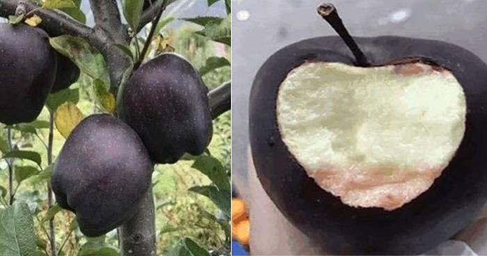 कई सारी खुबियों से भरपूर होता है 'काला सेब', लाल सेब से कई गुना अधिक होती है कीमत