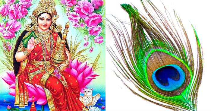 घर के इस दिशा में रख दीजिये एक मोर पंख, माँ लक्ष्मी की बरसेगी असीम कृपा