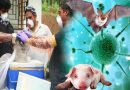 जानें क्या है निपाह वायरस जिसने केरला में मचा दी थी तबाही, क्या हैं इसके लक्षण और बचाव