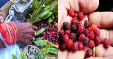इस सदाबहार फल से दूर होती है कैंसर और लकवा जैसी कई बड़ी बीमारियां, जानिए इसके दिलचस्प फायदे