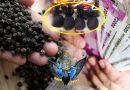 काली मिर्च के ये टोटके जो बदल सकते हैं किसी की भी जिंदगी