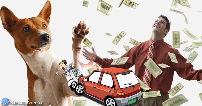 बुरी दुर्घटना घटने पर और धन का लाभ होने पर कुत्ते देते हैं ये संकेत
