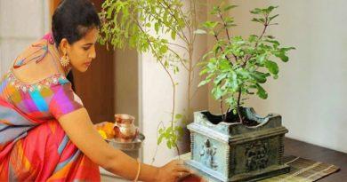भूलकर भी घर की इस दिशा में ना रखें तुलसी का पौधे वरना होगा अनर्थ