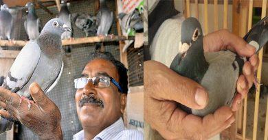 इस देश में होती है कबूतरों की रेस, जिसमें 65 लाख से अधिक की कीमत पर बिका एक कबूतर