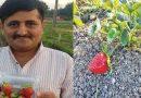 20 लाख की नौकरी छोड़ इस इंसान की शुरू की स्ट्रॉबेरी की खेती, हो गया मालामाल