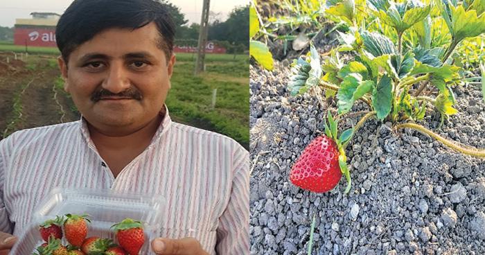 Photo of 20 लाख की नौकरी छोड़ इस इंसान की शुरू की स्ट्रॉबेरी की खेती, हो गया मालामाल