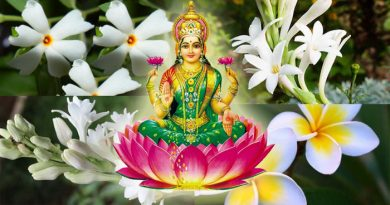 घर के आंगन में बस लगा दें ये 5 फूल, जो मिटा देंगे आपके जीवन के सारे दुख