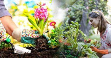 बागवानी से घर में बनी रहती है सुख और समृद्धि, बस रखें इन बातों का ध्यान