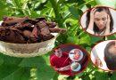 जानिए क्या है रतनजोत के औषधीय गुण और उससे जुड़े करिश्मयी फायदे