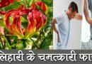 सेहत से जुड़े हैं कलिहारी के फायदे