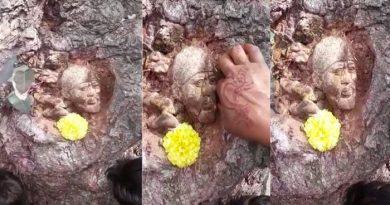 पेड़ पर अचानक उभरी साई बाबा की आकृति, दर्शन को लगी भीड़, Video वायरल, जाने सच