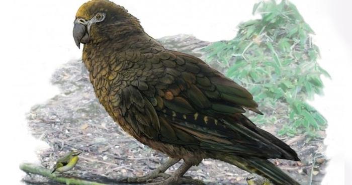 Photo of न्यूजीलैंड में खोजा गया दुनियां का सबसे बड़ा तोता, हाईट इंसान से आधी