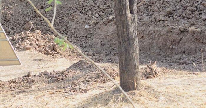 Photo of इस फोटो के अंदर हैं एक तेंदुआ, दम हैं तो बताओं कहाँ छिपा हैं? 90% हो गए फ़ैल