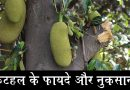 कटहल के फायदे और नुकसान ( Jackfruit Benefits And Side Effects in Hindi)