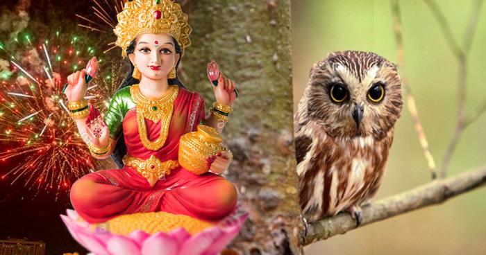 दिवाली की रात उल्लू दिखे तो समझें घर पधारी हैं माता लक्ष्मी, इन 3 जीवों का भी दिखना होता है शुभ