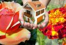 तुलसी, गुलाब, गेंदे जैसे पौधों से बढ़ती है घर की सकारात्मकता, जाने इन्हें किस दिशा में लगाना चाहिए