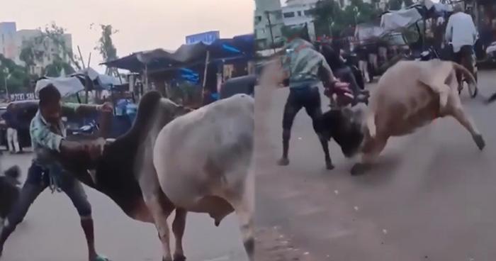Photo of 'बाहुबली के भल्लालदेव' की तरह सांड से सामना किया इस शख्स ने, देखिये आगे फिर क्या हुआ