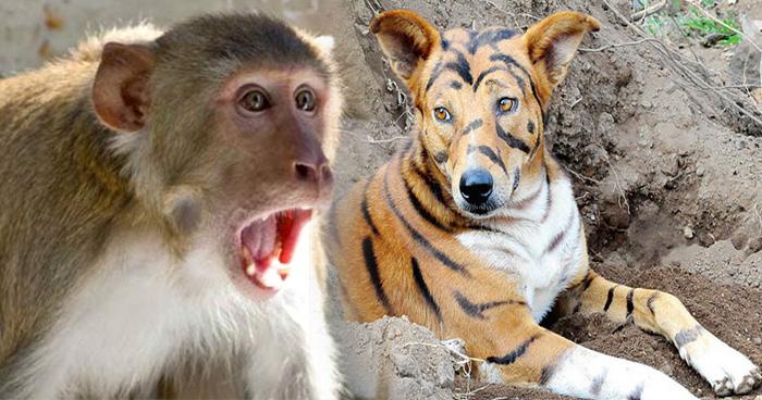 बंदर रोज खेत की फसल बर्बाद कर जाते थे, किसान ने कुत्ते को बना दिया टाइगर और फिर..