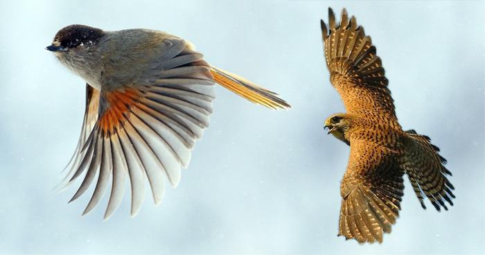 ये हैं दुनिया के ऐसे 10 शानदार पक्षी, जो आसमान में भरते हैं ऊंची उड़ान