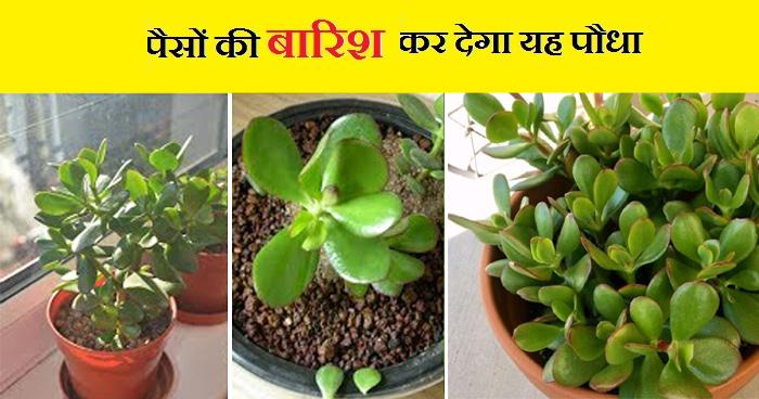 Photo of घर में इस पौधे को रखने से चमक जाती है किस्मत, कंगालों को भी बना देता है मालामाल