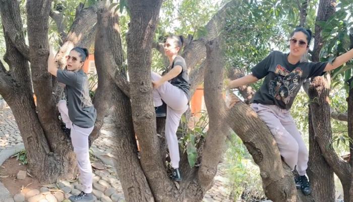 Photo of वायरल हुआ सनी लियोनी का हैरान कर देने वाला विडियो, चढ़ गईं अचानक पेड़ पर और करने लगीं ये काम
