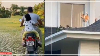 Photo of बेटी संग घर के गार्डन में बाइक दौड़ा रहे MS धोनी, नज़ारा देख कुत्ते छत पर खड़े हो गए, Video वायरल