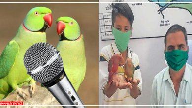 Photo of राजस्थान: 11 साल के लड़के के केस में 2 तोतों ने दी गवाही, तो SHO सुनाया बड़ा फैसला
