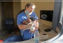 Photo of मां की तरह सीने से लगाकर नर्स ने बचाई 3 नवजात बच्चों की जान, वायरल हुई तस्वीरें