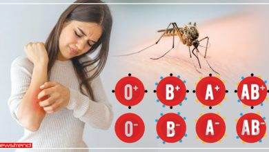 Photo of इस ब्लड ग्रुप के लोगों को सबसे अधिक काटते हैं मच्छर, जानिये क्या कहता है आप का ब्लड ग्रुप