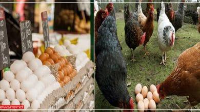 Photo of जानिये क्या होता है आर्गेनिक अंडे, बाज़ार में बढ़ रही इन अंडों की मांग