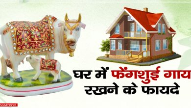 fengsui cow benefits