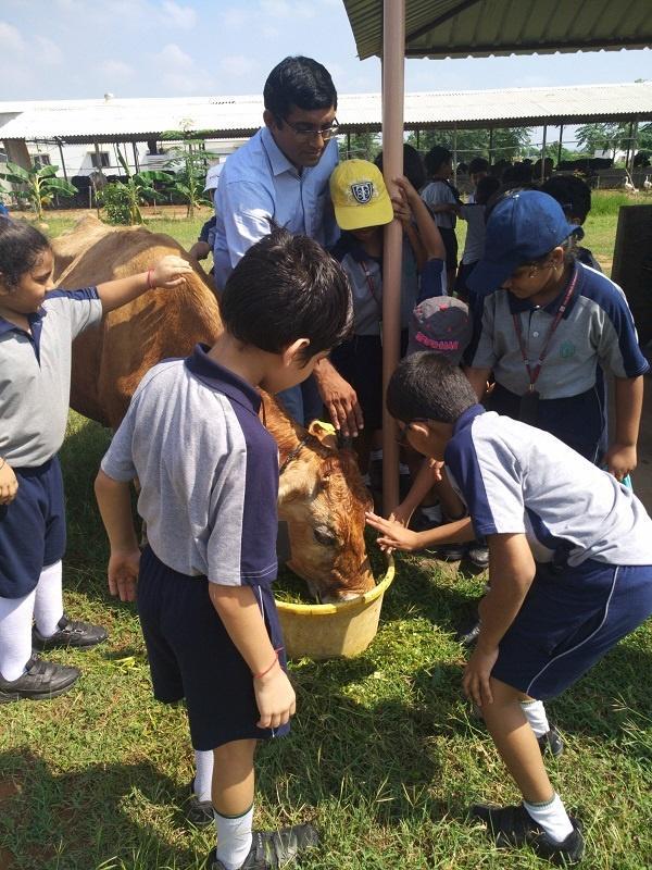 kishore indukuri cow farm