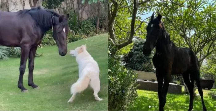 ms dhoni dog and horse