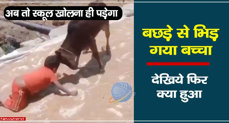 kids fight with baby cow