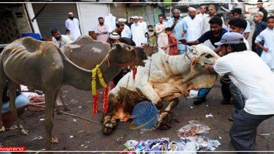 bakra-eid-slaughter-ban-in-jammu-kashmir