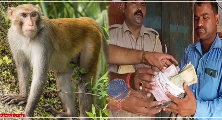 uttar pradesh monkeys ran away with 3 lakh rupees